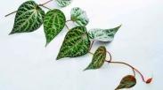 Buat Kamu Yang Belum Tahu, 5 Tanaman Herbal ini Berkhasiat Lho! Apalagi Yang Nomor 3...