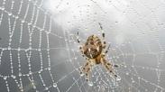 Jaring Laba-laba Untuk Gambarkan Pekerjaan Iman Kita