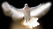Roh Kudus yang Ada di Dalammu Bekerja Dengan Cara yang Unik, Alamilah Lewat 6 Hal Ini