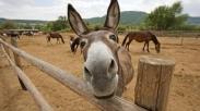 Menang Menghadapi Masalah Belajar Dari Kisah Keledai.Apakah Kamu Siap?