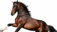 Dianggap Keras Kepala Seperti Kuda, Haruskah Kita Mempertahankan Pendapat Kita?