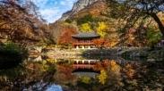 Mengintip Wisata Anti Mainstream di KorSel, Provinsi Jeolla Hadirkan Destinasi Impian