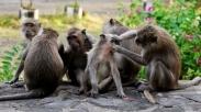 Diperkirakan Kena Malaria Monyet, Petugas Panik 100 Warga Alami Demam Tinggi Bersamaan