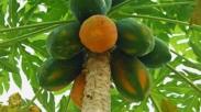 Ibarat Pohon Yang Rantingnya Patah, Tancapkanlah Akarmu Dalam Kristus Dan Tetaplah Tumbuh!