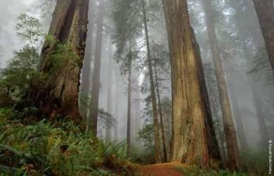 Alkisah Tentang Tiga Pohon