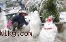 Dua Negara Ini Alami Hujan Salju Pertama Saat Natal
