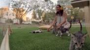 Wow, Terapi Kucing Bantu Redakan Stress