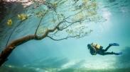 Green Lake, Taman Bawah Air Austria yang Tak Biasa