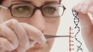 Peneliti Uji Coba Transplantasi Organ Babi Pada Manusia