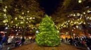 Tiap Tahun, Keluarga Ini Pasang 1100 Lampu untuk Pohon Cemaranya