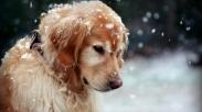 Setelah Hachiko, Kisah Anjing Ini Selamatkan Tuannya Amat Mengharukan