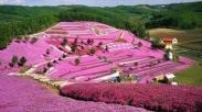 Seperti Bunga, Kita Perlu Berada Di Tanah Yang Gelap Penuh Cacing Untuk Bertumbuh Indah