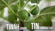 Fakta Alkitab: Mengenal Pohon Ara yang Dikutuk Yesus dalam Perjanjian Baru