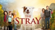 Bingung Akhir Pekan Ngapain? Film The Stray Ini Siap Warnai Pekanmu