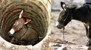 Kisah Si Keledai Tua yang Jatuh ke Sumur, Selamat Karena Responnya yang Benar