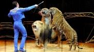 Saat Harimau-harimau Kehidupanmu Siap Menerkam, Selamatkan Dirimu dengan Berseru