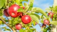 Fakta Alkitab: Keberadaan Taman Eden Ada Di Dunia Ini, Benarkah? (Part 2)