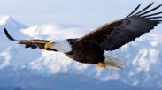 3 Pelajaran Iman yang Bisa Dipetik dari Seekor Burung Elang