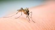 Musim Kemarau Bikin Nyamuk Merajalela di Rumah? Usir Dengan 10 Cara Sederhana Ini…