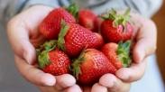 Buat yang Pengen Hilangkan Lemak Tubuh, Coba Konsumsi Strawberry Dengan Cara Ini…