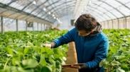 4 Top Bisnis Pertanian yang Hasilkan Keuntungan Besar, Mau Coba Gak?