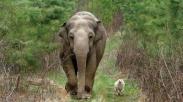 Waktunya Tuhan Gak Bisa Ditebak, Pahami Lewat Percakapan Anjing dan Gajah Ini