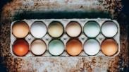 Sebelum Beli, Yuk Kenali Beda Telur Infertil dan Telur Biasa Dari Ciri-ciri Ini…