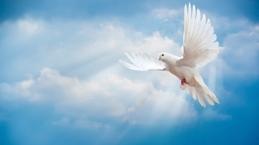 Hanya Roh Kudus yang Membuat Kesaksianmu Berbuah