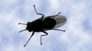Kisah Si Lalat Yang Gigih : Mati Sia-Sia Dengan Cara Yang Sama