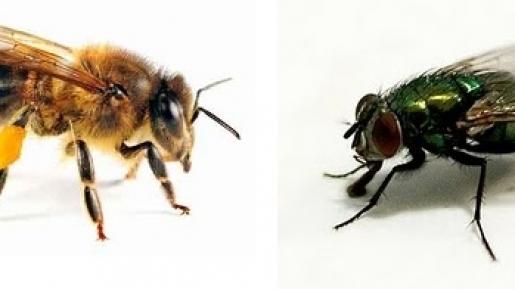 Ternyata Lalat dan Lebah Ini Mirip Sama Kehidupan Manusia, Lho. Simak, Yuk!