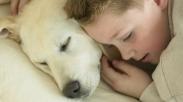 Wow, Ternyata Anjing Punya Andil Serius Dalam Menyembuhkan Penyakit Manusia, Lho
