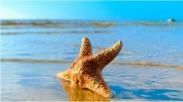 Anak Pantai dan Bintang Laut