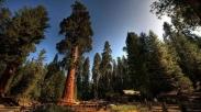 Iman Seperti Bonsai Atau Sequoia?