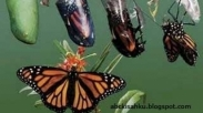 Jangan Takut Dengan Perubahan, Karena Kupu-kupu Yang Indah Bisa Muncul Dari Seekor Ulat