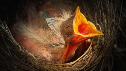 Jangan Takut, Tuhan Menyediakan. Burung di Udara Saja Tuhan Pelihara!