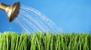 Apakah Benar Rumput Tetangga Lebih Hijau?