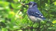 Saat Kuatir Menyerang, Belajarlah Dari Seekor Burung