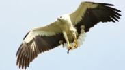 Bagai Burung Rajawali, Kita Harus Selalu Awas Dengan Lingkungan Baru!