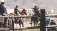 Bedanya Cowboy Dan Gembala Domba