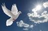 Seperti Merpati Yang Biasa, Tuhan Memiliki Tujuan Khusus Untuk Setiap Kita!
