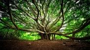 Akar Pohon yang Kuat
